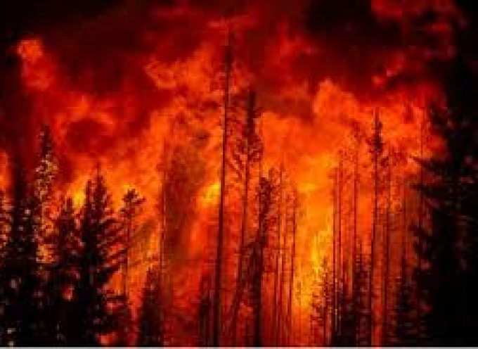 Planning for and dealing with Forest Fires